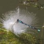 Feather Perch Art Print