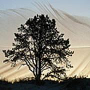 Feathering Dawn Art Print
