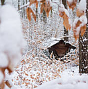 Feeding Site In The Forest In Winter  Art Print