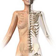Female Body With Bone Skeleton Art Print