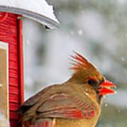 Female Cardinal In The Snow Art Print
