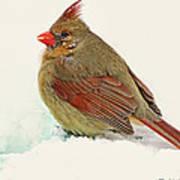 Female Cardinal In Winter II Art Print