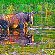 Female Moose Near Airport In Chicken-alaska   Art Print