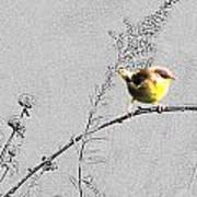 Female Yellow Throat On Gray Art Print