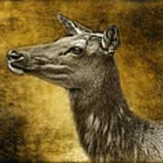 Female Yellowstone Elk Art Print