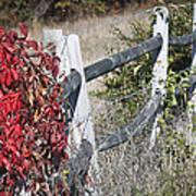 Fence And Creeper Art Print