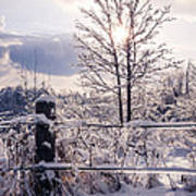 Fence And Tree Frozen In Ice Art Print