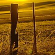 Fence Post In The Morning Light Art Print