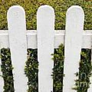 Fence With Hedge Art Print