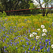 Fenceline Wildflowers Art Print