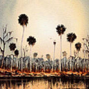 Fenholloway River Florida Art Print