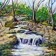 Ferndell Creek Noon  Art Print