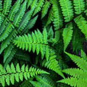 Ferns Along The River Art Print