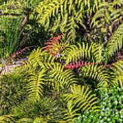 Ferns And More Art Print
