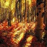 Ferns On The Forest Floor Art Print