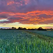 Field At Sunset Art Print