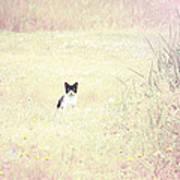 Field Cat Art Print