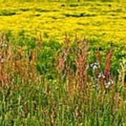 Field In Spring Art Print by Beverly Hammond