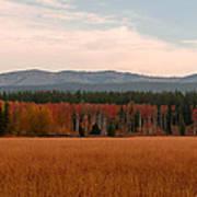 Field In Yellowstone Art Print