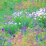 Field Of Flowers In Nature Art Print