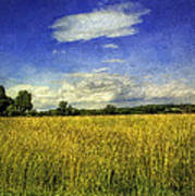 Field Of Gold Art Print