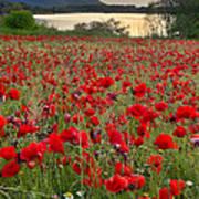 Field Of Poppies At The Lake Art Print