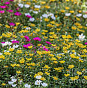 Field Of Pretty Flowers Art Print