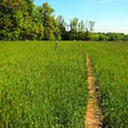 Field Path Art Print