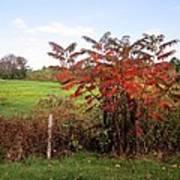 Field With Sumac In Autumn Art Print