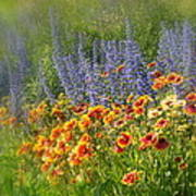 Fields Of Lavender And Orange Blanket Flowers Art Print
