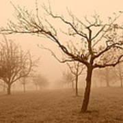 Fields Of Trees Art Print
