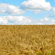 Fields Of Wheat Art Print