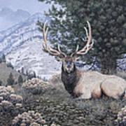 Fields Peak Elk Art Print