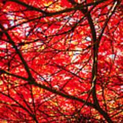 Fiery Maple Veins Art Print