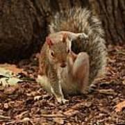 Fighter Squirrel Art Print