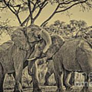 fighting male African elephants Art Print