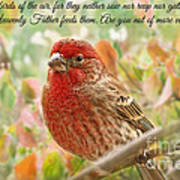 Finch With Verse New Version Art Print