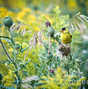 Find The Finch Art Print