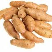 Fingerling Potatoes Art Print