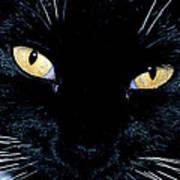 Fiona The Tuxedo Cat Art Print