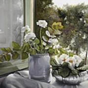 Fiori Bianchi Alla Finestra Art Print