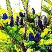 Fir Tree Buds Abstract Art Print