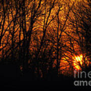 Fire In The Woods Sunset Art Print