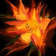 Firelily Art Print