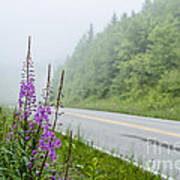 Fireweed And Fog Scenic Highway Art Print
