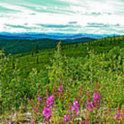 Fireweed And Mountains From Top Of The World Highway-yukon Art Print