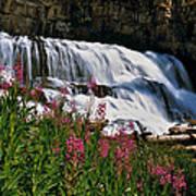 Fireweed Blooms Along The Banks Of Granite Creek Wyoming Art Print