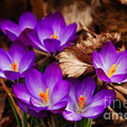First Signs Of Spring Art Print