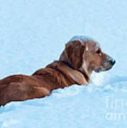 First Snow Bliss Art Print
