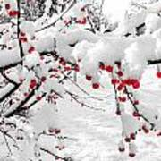 First Snow Art Print by Michelle and John Ressler